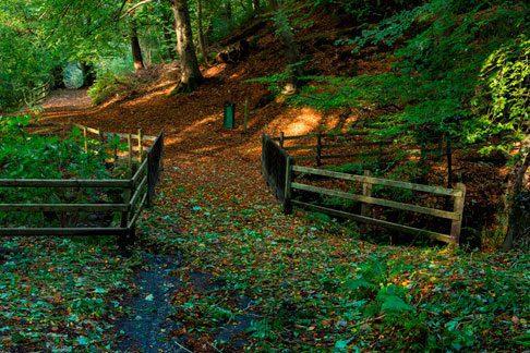 Ireland Country Path
