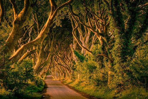 Ireland Woods