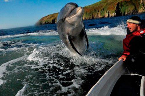 Ireland Tours - The Wildest Rover