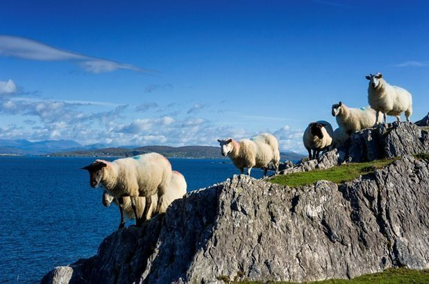 "Want to live on the ""Wild Side""? Get your group to try one of these exciting tours of the Wild Atlantic Way"